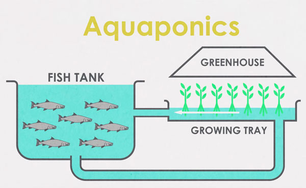 aquaponics brief