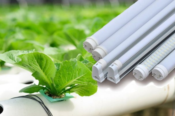 led-plant